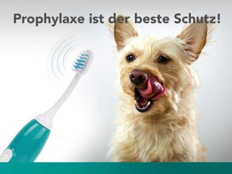 zahnstein emmi-pet Hunde Zahnbürste | Sanft und ohne zu bürsten | Zahnstein Weg! Profylaxe ist der Beste Schutz